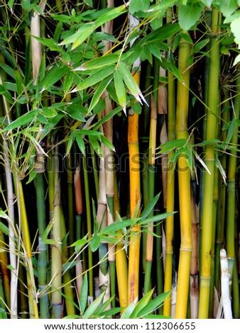 Wall of Bamboo - stock photo