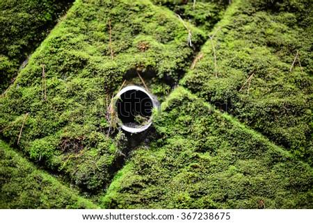 Wall of green moss at Kumano Kodo, ancient pilgrimage route in Kansai, Japan - stock photo