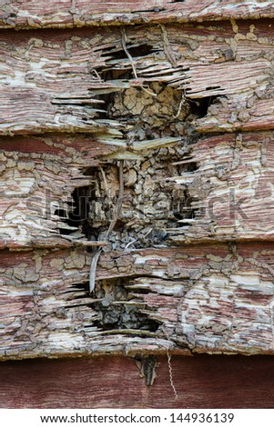 wall of house destroy by termites - stock photo