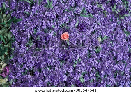 Wall of lavender flowers , artificial flowers , volumetric light , general views , live background, good texture - stock photo