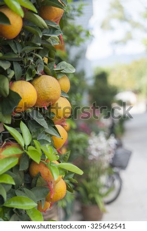 Wall of Tangerine with leaf