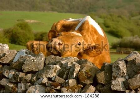 Wall Rub - stock photo