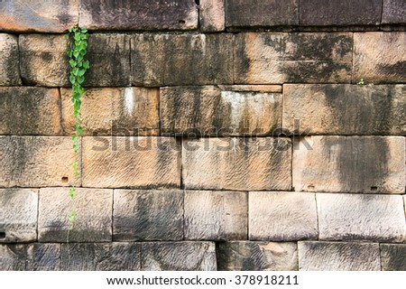 Wall with leaf