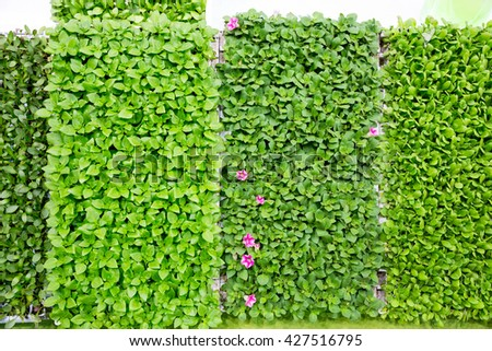 Wall with leafs