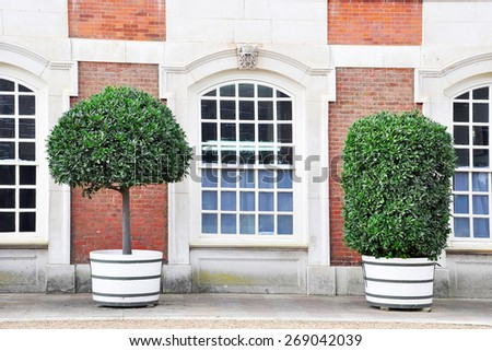 Wall with window and decorative shrubs in Hampton Court Palace, London, England, United Kingdom - stock photo