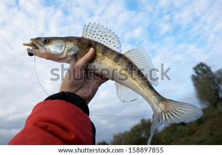 Walleye caught on handmade lure in fisherman's hand against cloudy sky - stock photo