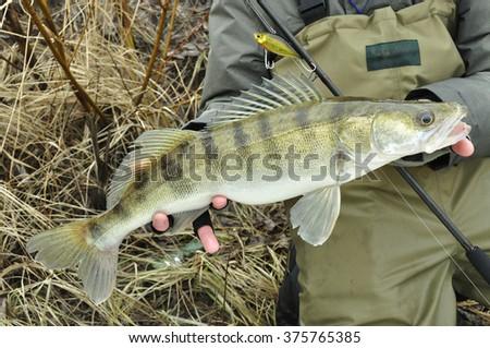 walleye fishing - stock photo