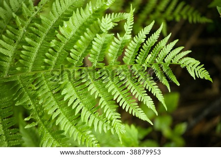 wallpaper background of one green fern frond - stock photo