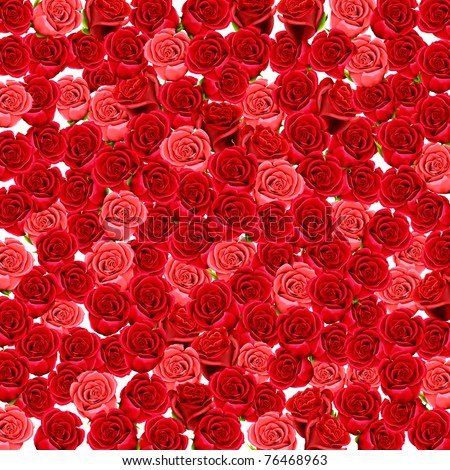 Wallpaper of red and pink roses - stock photo