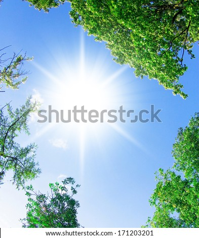 Wallpaper Sunshine Yellow Trees  - stock photo