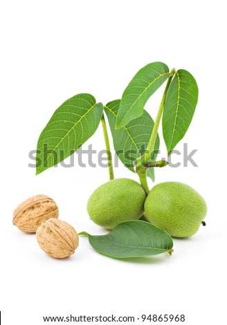 Walnut Branch - stock photo