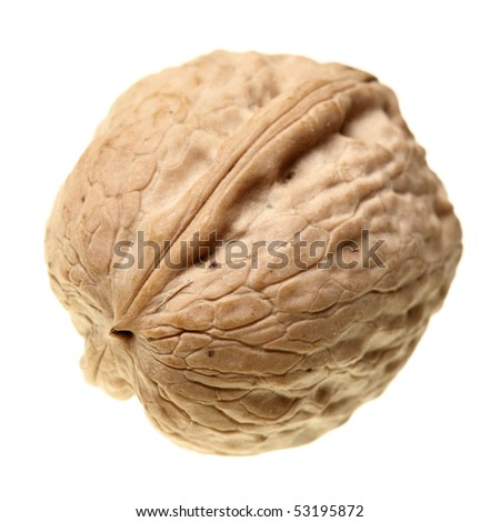 Walnut close-up isolated over the white background