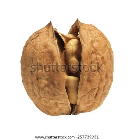 walnut open on white background   - stock photo