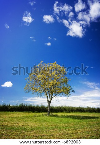 Walnut tree in the field - stock photo