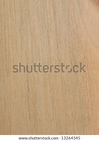 Walnut tree wood texture