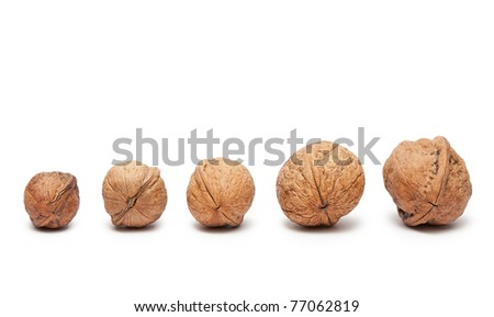 Walnuts from small to big isolated on white - stock photo