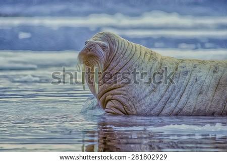 Walrus bull in Canadian High Arctic,photo art - stock photo