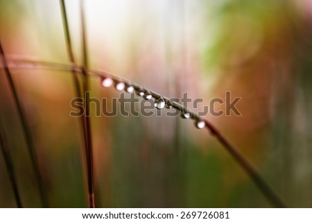 warm and green tones of color reflected in a single droplet of dew water hanging on a grass stem - stock photo