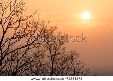 Warm evening sun above naked trees on a bright winter day in Karlsruhe, Germany - stock photo