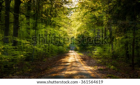 Warm forest in spring