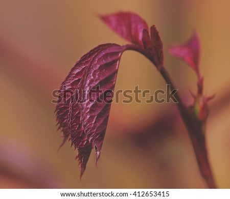 warm red colored rose leafs - stock photo