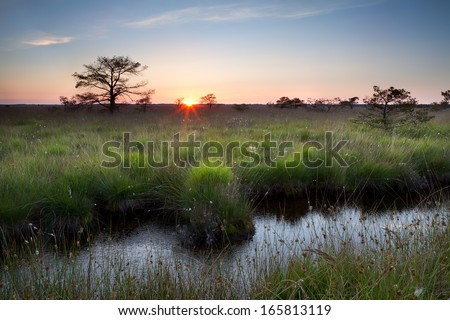warm summer sunset on swamp, Fochteloerveen, Drenthe, Netherlands - stock photo