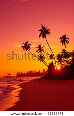 Warm vivid sunset on tropical ocean beach with palm tress silhouettes - stock photo