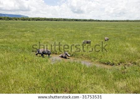 Warthog family in the Lake Manyara National Park - Best of Tanzania - stock photo