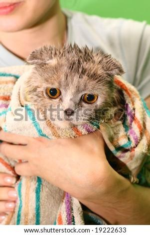 wash cat - stock photo