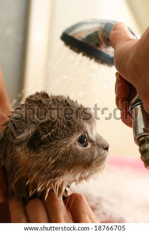 wash the cat - stock photo