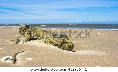 Washed Driftwood on the sandy beach at Baltic Sea
