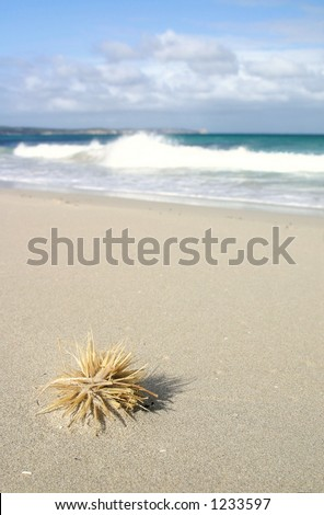 Washed up by the tide and drying out, this piece of ocean debris makes for an interesting foreground with great space for copy. Great shot for holiday/vacation, leisure time, relaxation, travel, etc. - stock photo