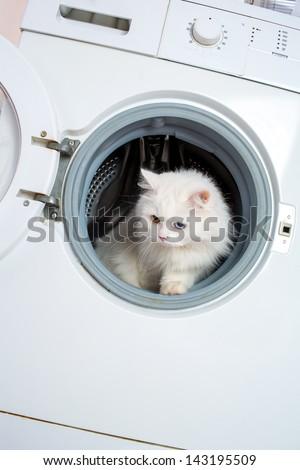 Washer machine and white cat - stock photo