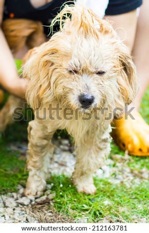 Washing The Dog - stock photo