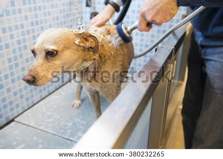 Washing the dog in the doggy shower - stock photo