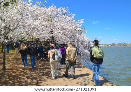 WASHINGTON, DC - APRIL 11: Cherry Blossom Festival on April 11, 2015 in Washington DC,USA. The festival is a spring celebration in Washington, D.C.and people from all over the world come to visit. - stock photo