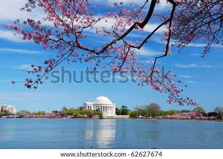 Washington DC Cherry Blossom in Spring with Jefferson memorial over lake. - stock photo