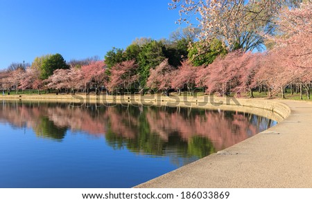Washington, DC Cherry Trees in Early Bloom reflecting in the water of the Tidal Basin in spring. - stock photo