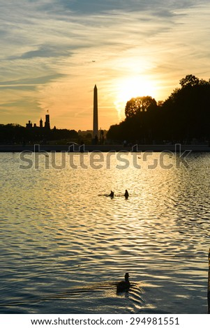 Washington DC - Ducks in silhouettes  in Capitol Building reflection pool with Washington Monument background at sunset  - stock photo