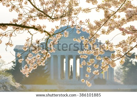 Washington DC in Spring - Jefferson Memorial during Cherry Blossom Festival  - stock photo