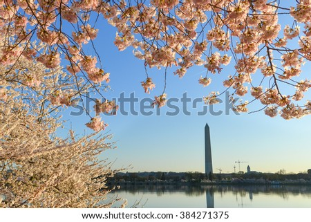 Washington DC in Spring time - Cherry Blossom Festival at Tidal Basin