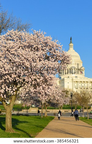 Washington DC in Spring time - US Capitol and spring blossoms - stock photo
