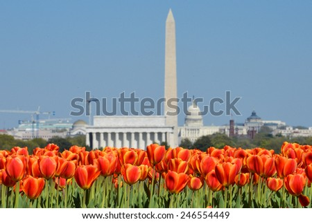 Washington DC skyline with monuments including Lincoln Memorial, Washington Monument and the Capitol in Spring with tulips foreground  - stock photo