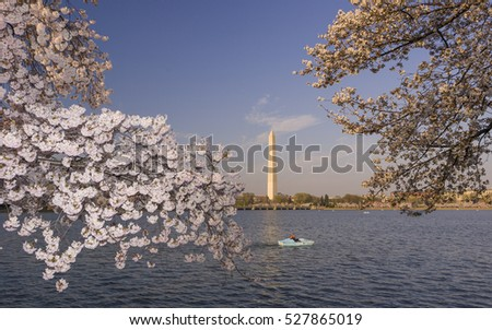 WASHINGTON, DC, USA - MARCH 30, 2006: Cherry tree blossoms at the Tidal Basin, with The Washington Monument in the distance.