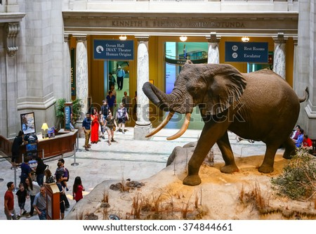 WASHINGTON DC, USA - MAY 3, 2015: Visitors looking at the African Elephant in the Museum of Natural History. - stock photo