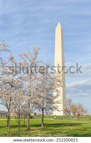 Washington Monument during Cherry Blossom Festival - Washington DC, United States  - stock photo
