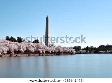 Washington Monument during the Cherry Blossom Festival. Washington, DC - stock photo