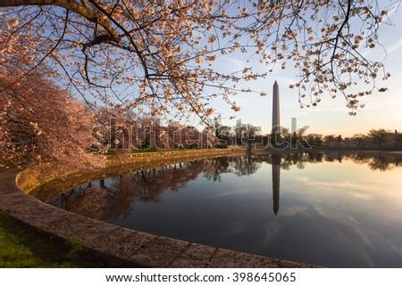 Washington Monument, National Cherry Blossom Festival, Washington, DC - stock photo