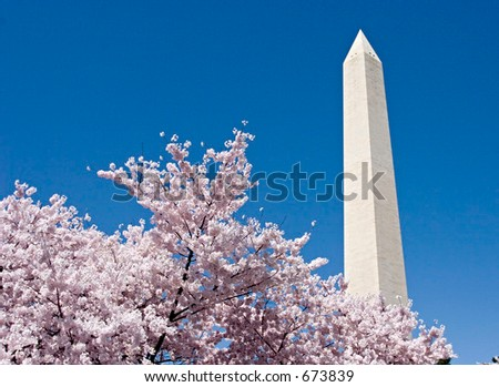Washington Monument over cherry trees