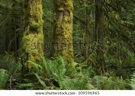 Washington State Rainforest Landscape. Deep Mossy Pacific Northwest Forest. Nature Photography Collection